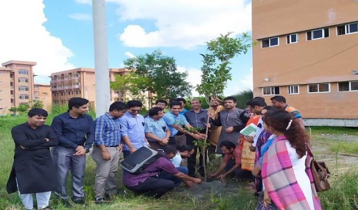 বৃক্ষরোপণ করলো বরিশাল বিশ্ববিদ্যালয় শিক্ষক সমিতি